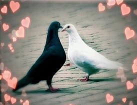 Szybkie randki i zasady przyciągania